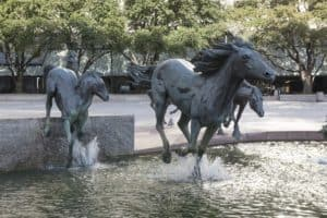 mustangs in las colinas